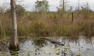 Importance of wildlife conservation – Catherine Opie's Photographs Glorify Okefenokee Swamp